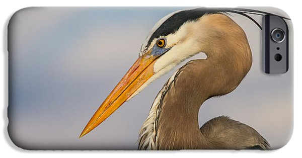 Wildlife iPhone Cases - A Pensive Blue Heron iPhone Case by Andres Leon