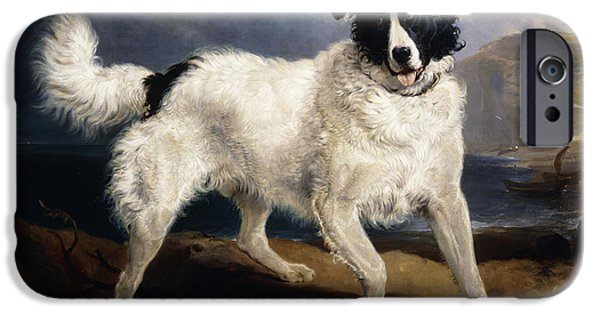 Dog Close-up Paintings iPhone Cases - A Portrait of Neptune iPhone Case by Sir Edwin Landseer