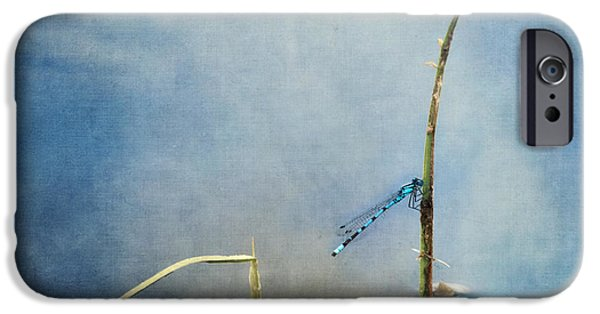 Fauna iPhone Cases - A Quiet Moment iPhone Case by Priska Wettstein