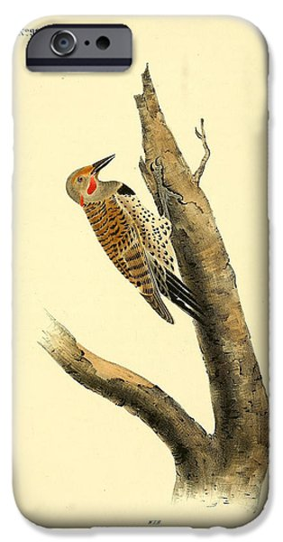 Botanical Drawings iPhone Cases - A Red Moustached Woodpecker iPhone Case by John James Audubon