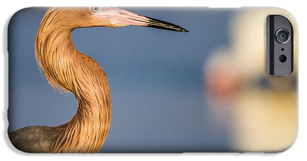 Water iPhone Cases - A reddish Egret Profile iPhone Case by Andres Leon