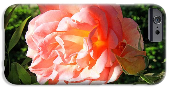 Cora Wandel iPhone Cases - A Rose And A Rose iPhone Case by Cora Wandel