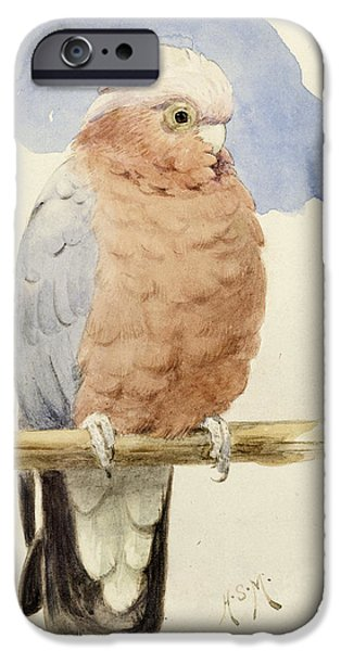 Cockatoo iPhone Cases - A Rose Breasted Cockatoo iPhone Case by Henry Stacey Marks
