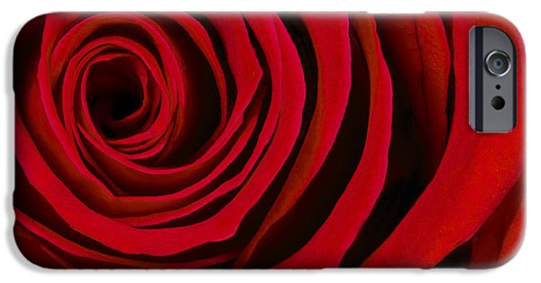 Delicate iPhone Cases - A Rose for Valentines Day iPhone Case by Adam Romanowicz