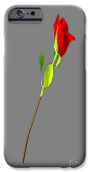 Multimedia iPhone Cases - A Rose Is A Rose Is A Rose iPhone Case by Tina M Wenger