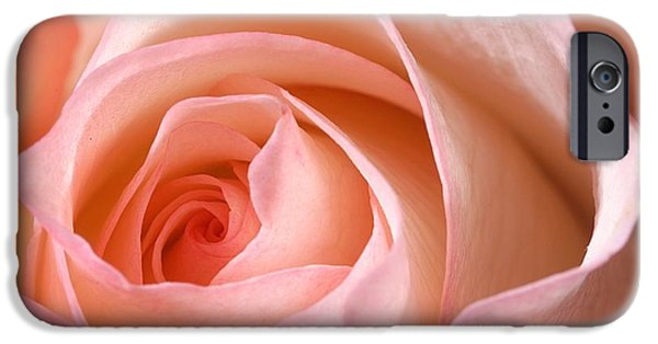 Botanical Photographs iPhone Cases - A Rose Is A Rose iPhone Case by Joe Kozlowski