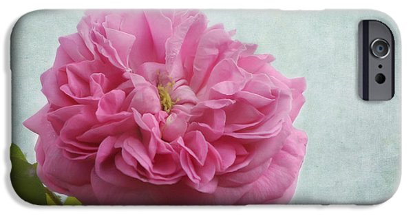 Innocence iPhone Cases - A Rose iPhone Case by Kim Hojnacki