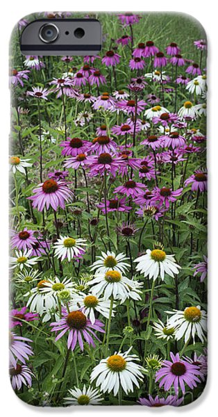 Echinacea iPhone Cases - A Sea of Echinacea  iPhone Case by Tim Gainey
