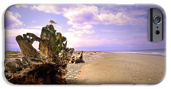 Spit iPhone Cases - A Seagull on the Dungeness Spit iPhone Case by Tara Turner