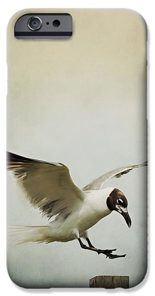 Flying Seagull iPhone Cases - A Seagulls Landing iPhone Case by Trish Mistric