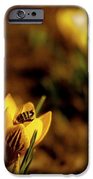 Crocus iPhone Cases - A Sign of Spring iPhone Case by Rona Black