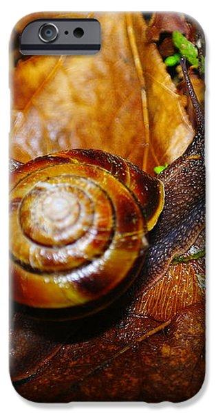 A SLOW SNAIL iPhone Case by Jeff  Swan