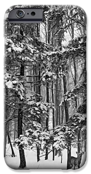 Winter Storm iPhone Cases - A Snowy Day bw iPhone Case by Steve Harrington