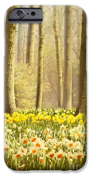 Forest iPhone Cases - A Spring Day iPhone Case by Jasna Buncic