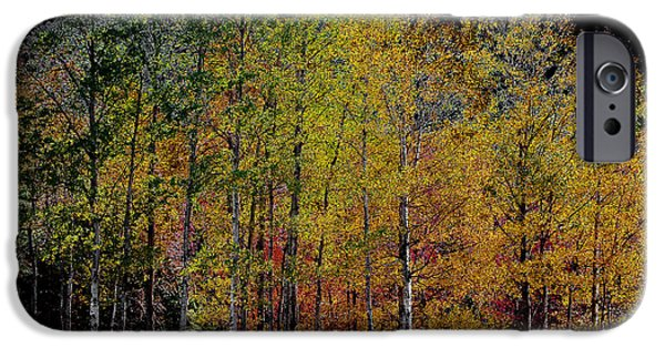 Surreal Landscape Digital iPhone Cases - A Stand of Birch Trees in Autumn iPhone Case by David Patterson