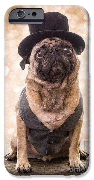 New Year iPhone Cases - A Star Is Born - Dog Groom iPhone Case by Edward Fielding