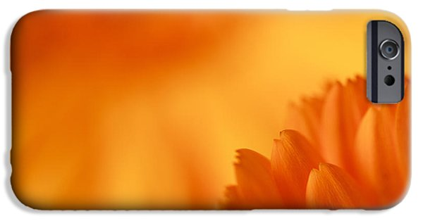 Nature Study iPhone Cases - A Study in Color iPhone Case by Karma Boyer