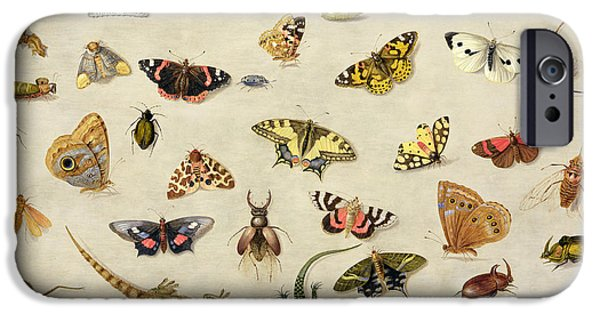Caterpillar iPhone Cases - A Study of insects iPhone Case by Jan Van Kessel