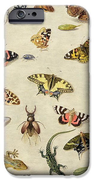 A Study of insects iPhone Case by Jan Van Kessel