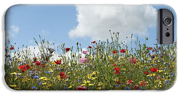 Friendly iPhone Cases - A Summers Day iPhone Case by Tim Gainey
