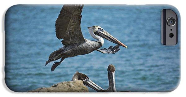 Sea Birds iPhone Cases - A Suspicious Eye iPhone Case by Joel P Black