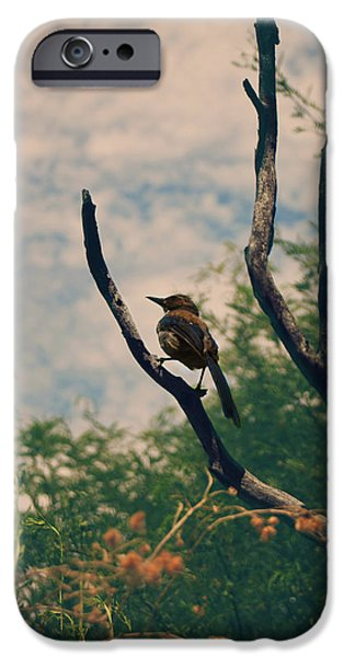 Blue Jay iPhone Cases - A Sweet Song iPhone Case by Laurie Search