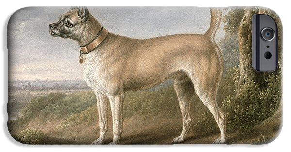 Dog In Landscape iPhone Cases - A Terrier on a path in a wooded landscape iPhone Case by Charles Towne