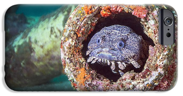 Panama City Beach iPhone Cases - A Toadfish Inside A Pipe Cavity iPhone Case by Michael Wood