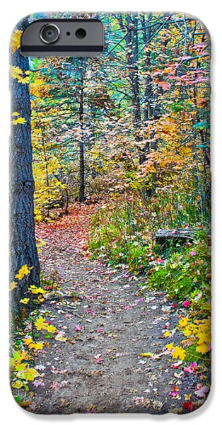 West Fork iPhone Cases - A Trail in West Fork iPhone Case by Brian Lambert