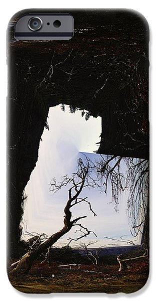 Tree Roots Photographs iPhone Cases - A Tree In A Square Abstract iPhone Case by Jeff  Swan