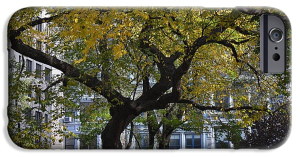 Robert Daniels iPhone Cases - A Tree On Fifth Avenue iPhone Case by Robert Daniels
