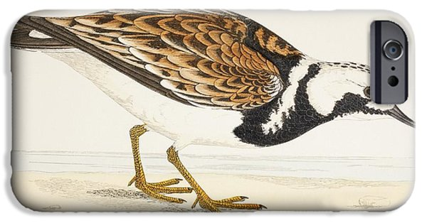 Nineteenth iPhone Cases - A Turnstone. Arenaria Interpres. From A iPhone Case by Ken Welsh