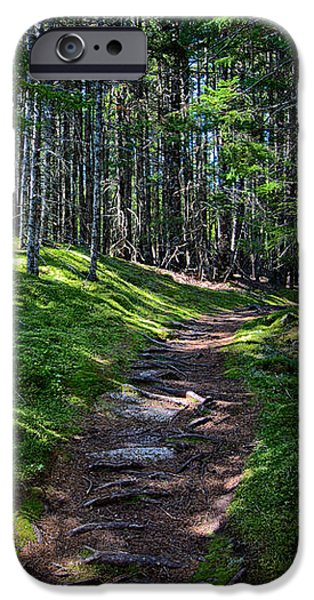 Recently Sold -  - Maine iPhone Cases - A Walk in the Woods iPhone Case by John Haldane