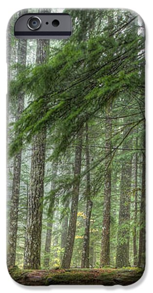 A Walk Through the Forest iPhone Case by Jean Noren