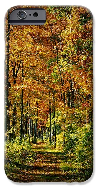 A Walk To Remember iPhone Cases - A Walk To Remember In Autumn iPhone Case by Dan Sproul