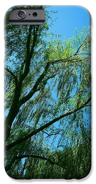 Cora Wandel iPhone Cases - A Weeping Willow Tree iPhone Case by Cora Wandel