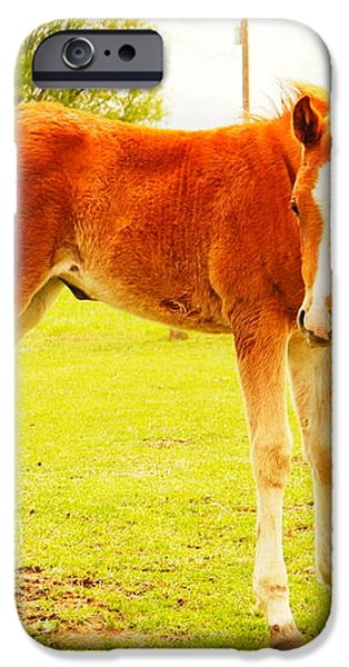 A YOUNG FOAL iPhone Case by Jeff  Swan