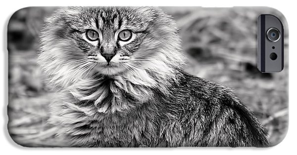 Kitten iPhone Cases - A Young Maine Coon iPhone Case by Rona Black