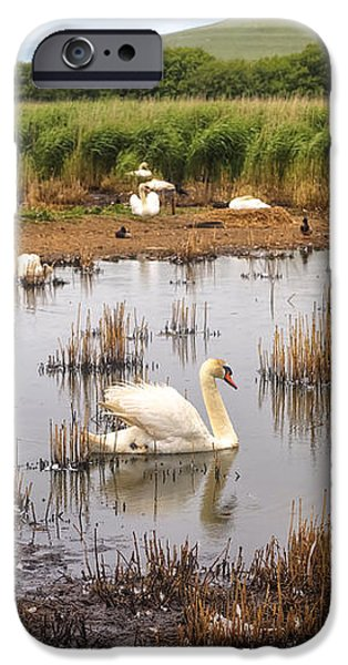 Abbotsbury Swannery iPhone Case by Joana Kruse