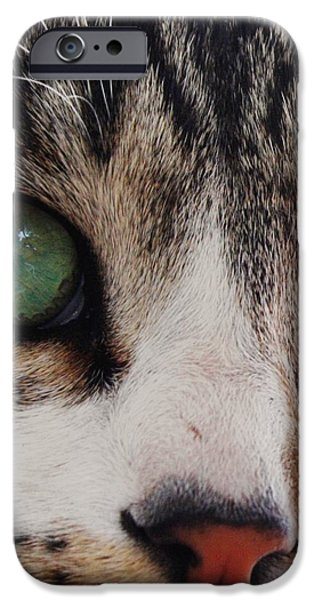 Pictures Of Cats Photographs iPhone Cases - Absolute Honesty iPhone Case by Anita Dale Livaditis