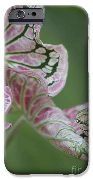 Abstract by Nature iPhone Case by Nola Lee Kelsey