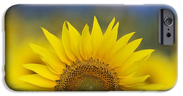 Crops Photographs iPhone Cases - Abstract Sunflower Panoramic  iPhone Case by Tim Gainey