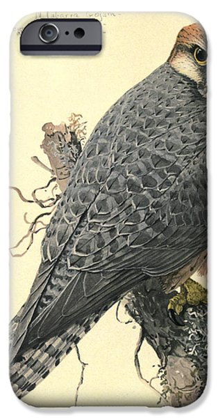 Ethiopia iPhone Cases - Abyssinian Lanner iPhone Case by Rob Dreyer AFC