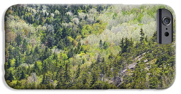 Beautiful Vistas iPhone Cases - Acadia National Park - Mount Desert Island - Forest in Spring iPhone Case by Keith Webber Jr