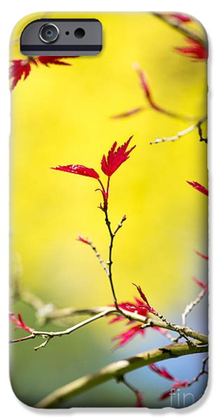Acer colour iPhone Case by Tim Gainey