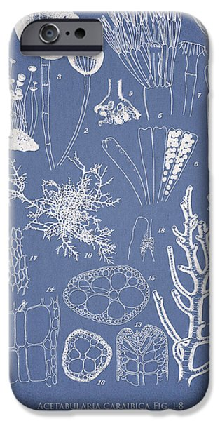 Algae iPhone Cases - Acetabularia caraibica and Chondria intricata iPhone Case by Aged Pixel