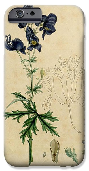 Botanical Drawings iPhone Cases - Aconitum Napellus by Sowerby iPhone Case by Philip Ralley