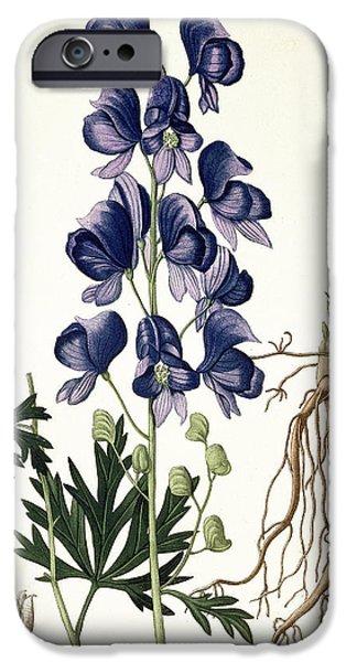 Botanical Drawings iPhone Cases - Aconitum Napellus iPhone Case by LFJ Hoquart