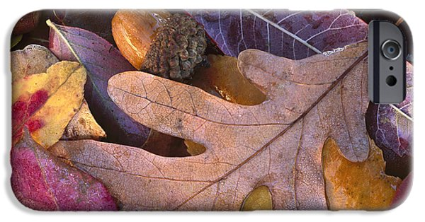 Arkansas iPhone Cases - Acorns And Fall Leaves Petit Jean State iPhone Case by Tim Fitzharris