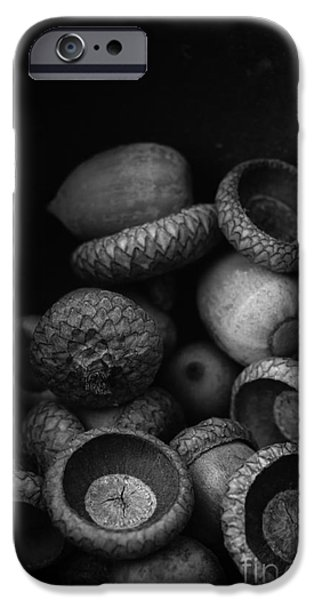 Wooden Bowl iPhone Cases - Acorns Black and White iPhone Case by Edward Fielding